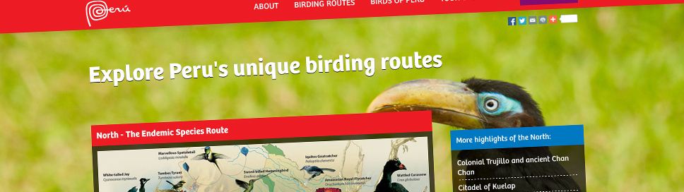 Peru Bird Watching Website